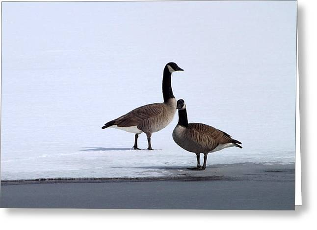 Winter Geese Greeting Card by Michael Sokalski