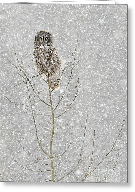 Winter Ghost Greeting Card
