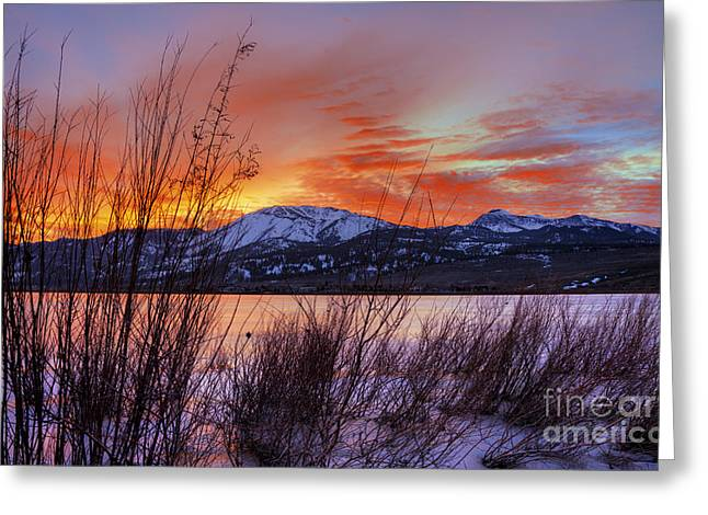 Winter Glow Greeting Card by Dianne Phelps