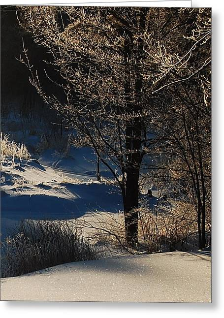 Greeting Card featuring the photograph Winter Glow by Mim White