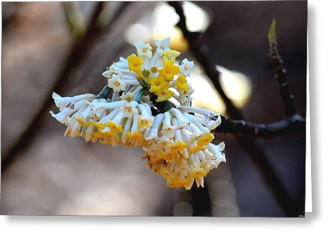 Winter Gold Greeting Card by Maria Urso