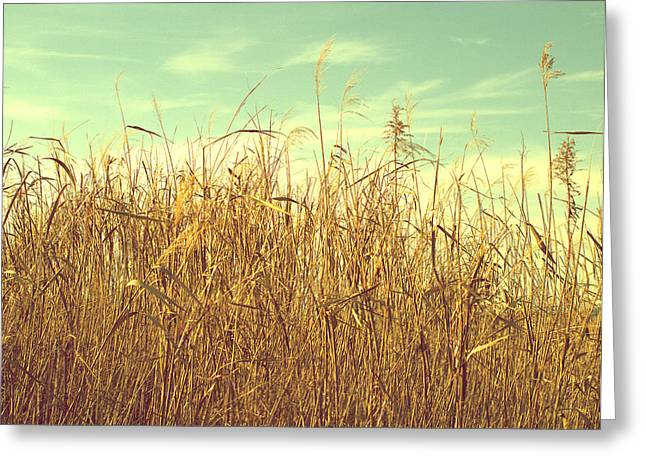 Winter Grass Greeting Card