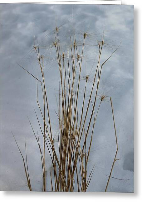 Winter Grass Greeting Card by Susan Copley