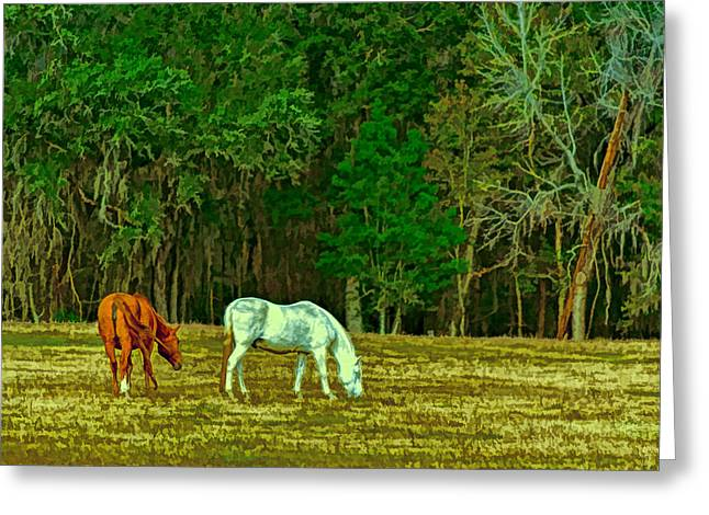 Winter Grazing In North Florida Greeting Card