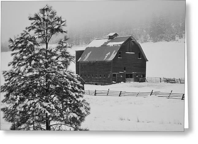 Winter Haven Greeting Card by Duane King