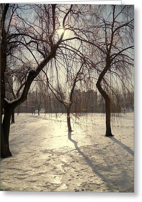 Willows In Winter Greeting Card by Henryk Gorecki