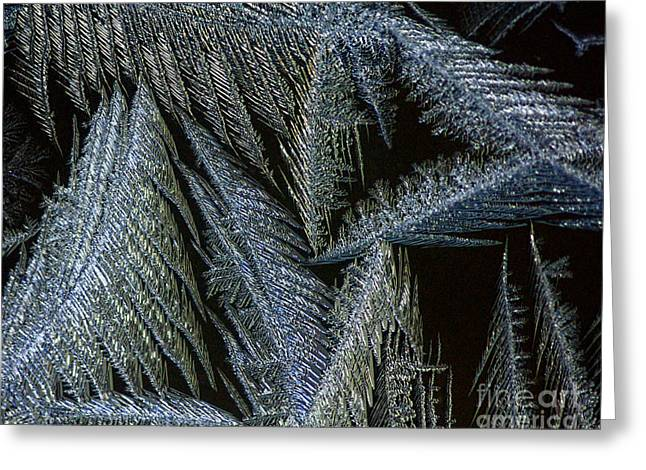 Winter In Canada- Winter Frost Greeting Card by Inspired Nature Photography Fine Art Photography