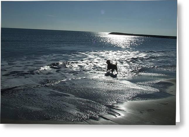 winter in Les Ste Marie de la mer Greeting Card