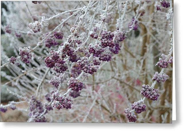 Greeting Card featuring the photograph Winter In Lila by Felicia Tica