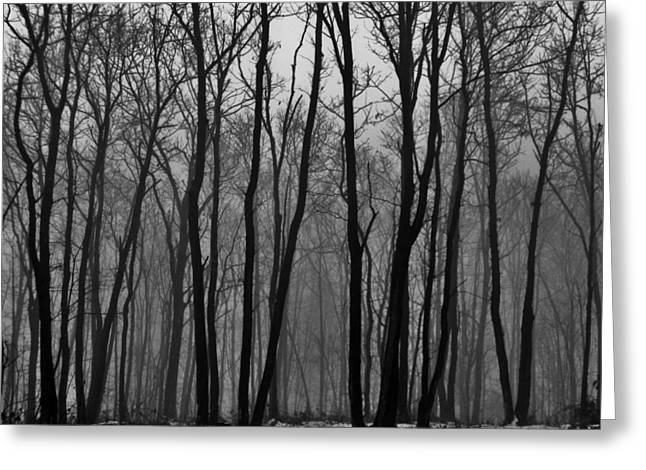 Winter In Pennsylvania Greeting Card by Benjamin Yeager