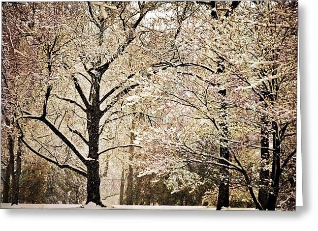 Winter In St. Louis Greeting Card by Marty Koch