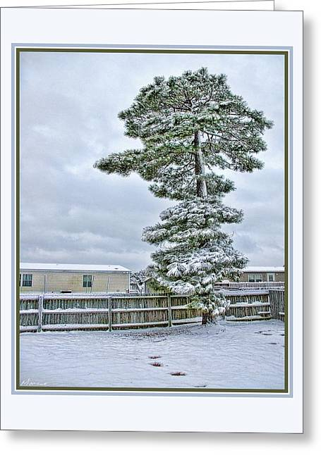 Winter In The Backyard Greeting Card by Barry Monaco
