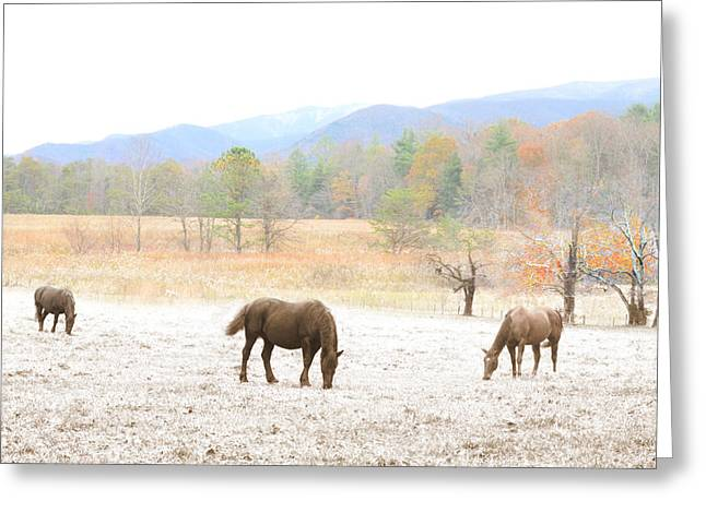 Winter In The Cove Greeting Card by Gene Smith