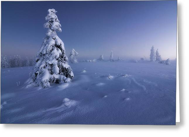 Winter Is Back Greeting Card