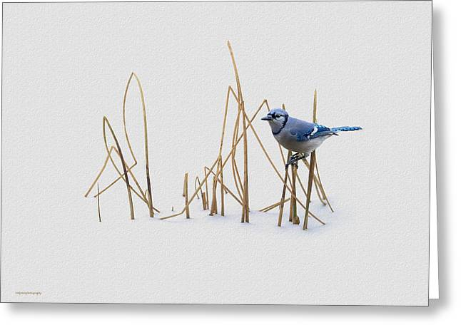 Winter Jay Greeting Card by Ron Jones