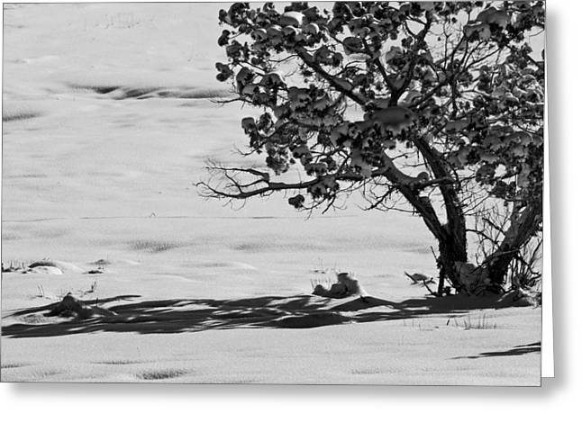 Greeting Card featuring the photograph Winter Juniper  by Eric Rundle