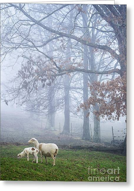 Winter Lambs And Ewe Foggy Day Greeting Card by Thomas R Fletcher