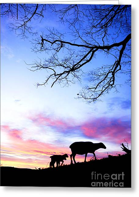Winter Lambs And Ewe Sunrise Greeting Card by Thomas R Fletcher
