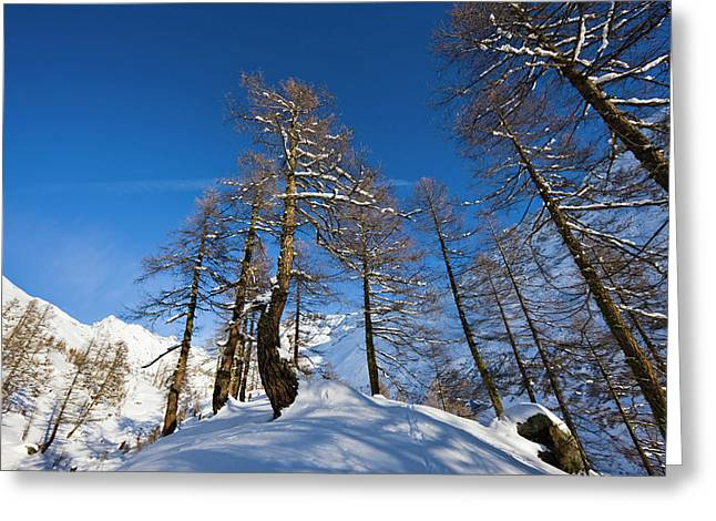 Winter Landscape With Larch Tree Forest Greeting Card by Martin Zwick