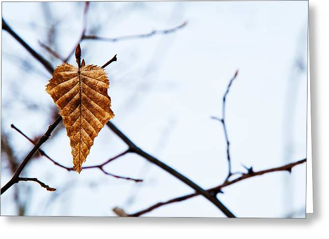 Greeting Card featuring the photograph Winter Leaf by Kennerth and Birgitta Kullman