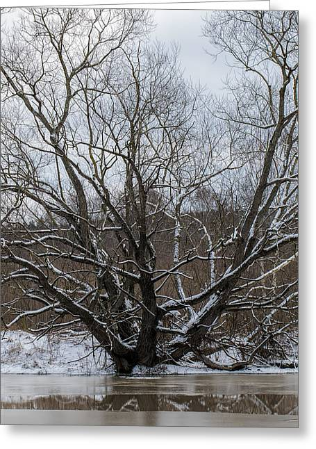 Winter  Leif Sohlman Greeting Card