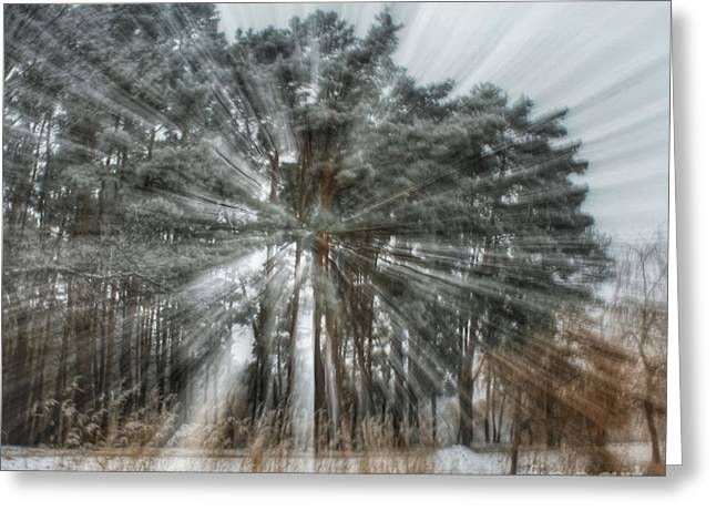 Winter Light In A Forest Greeting Card