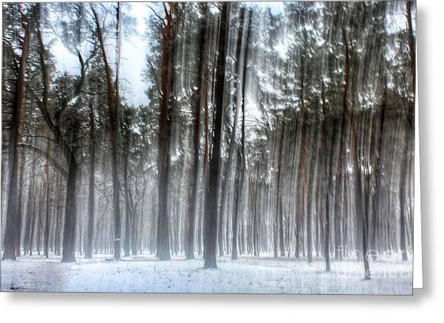 Winter Light In A Forest With Dancing Trees Greeting Card