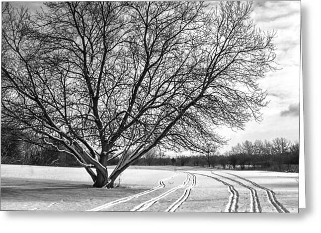 Winter Lines Greeting Card by Lauri Novak