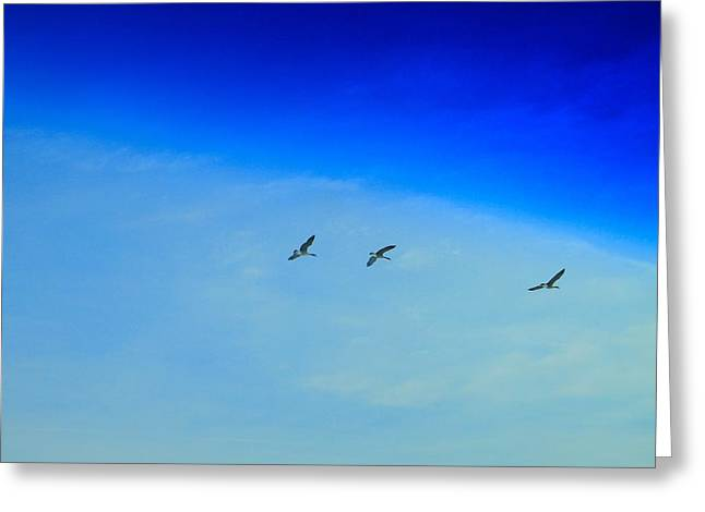 Winter Migration Greeting Card