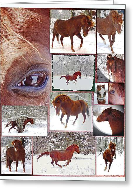 Winter Moments- With The Flashy Paso Fino Stallion Greeting Card by Patricia Keller