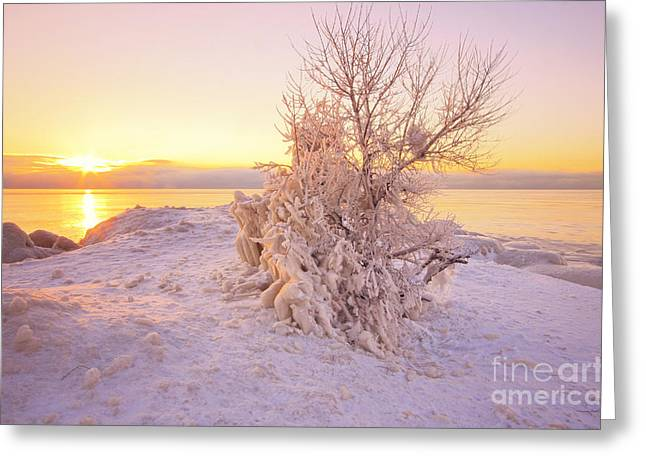 Winter Sunrise Greeting Card by Charline Xia