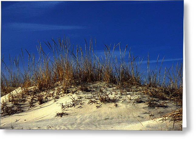 Greeting Card featuring the photograph Winter Morning On The Dunes by Bill Swartwout