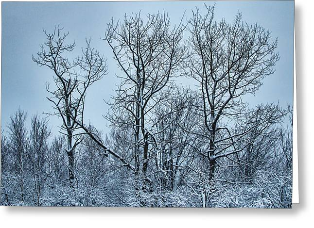 Winter Morning View Greeting Card