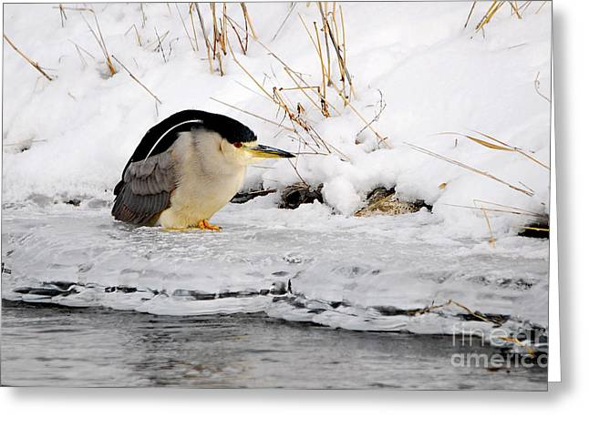 Winter Night Heron Greeting Card by Marty Fancy