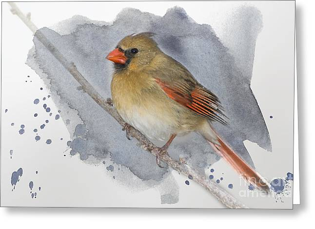 Winter Northern Cardinal Greeting Card by Betty LaRue