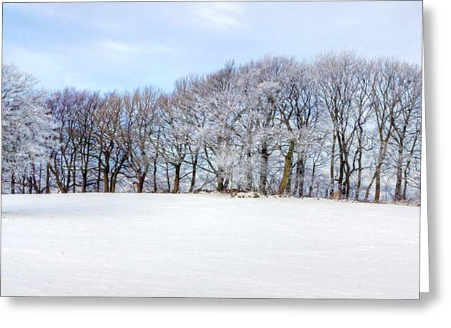 Winter Oak Greeting Card by David Birchall