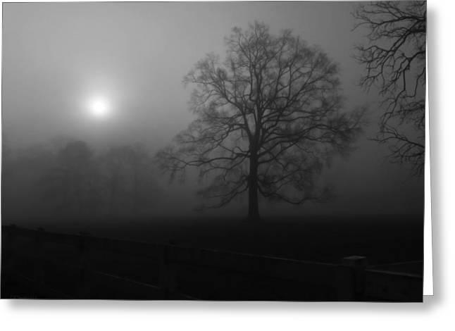 Winter Oak In Fog Greeting Card