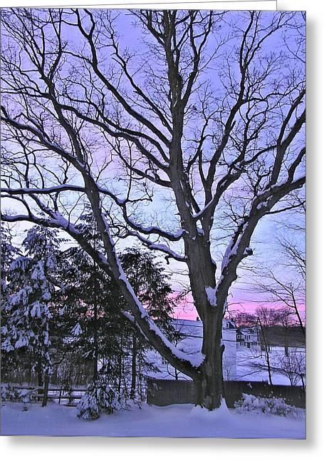 Winter Oak 2 Greeting Card