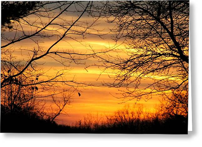 Winter Orange  Greeting Card by Justin Connor