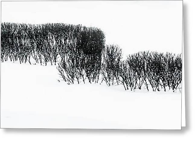 Winter Painting IIi. Ink Drawing By Nature Greeting Card by Jenny Rainbow