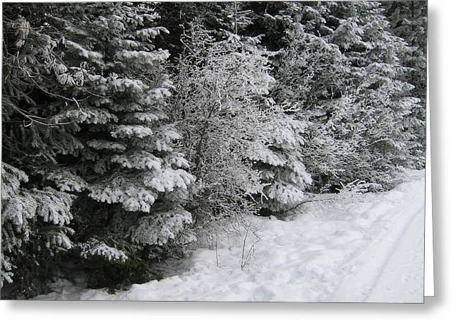 Winter Path Greeting Card by Kimberly Maxwell Grantier