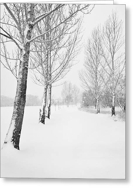 Winter Path Greeting Card by Theresa Tahara