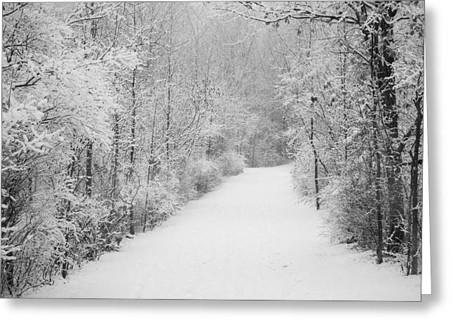 Winter Pathway Greeting Card