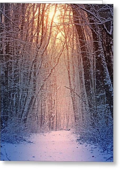 Winter Pathway Greeting Card by Rob Blair