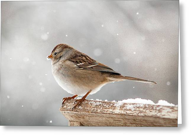 Winter Perch Greeting Card