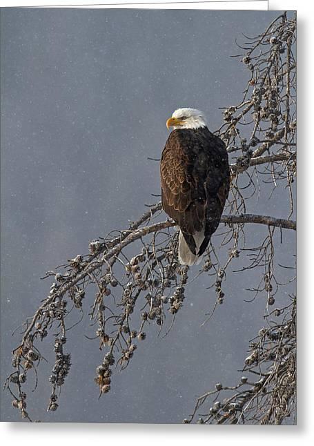 Winter Perch Greeting Card by Sandy Sisti