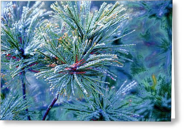 Winter Pine Greeting Card by Bonnie Bruno