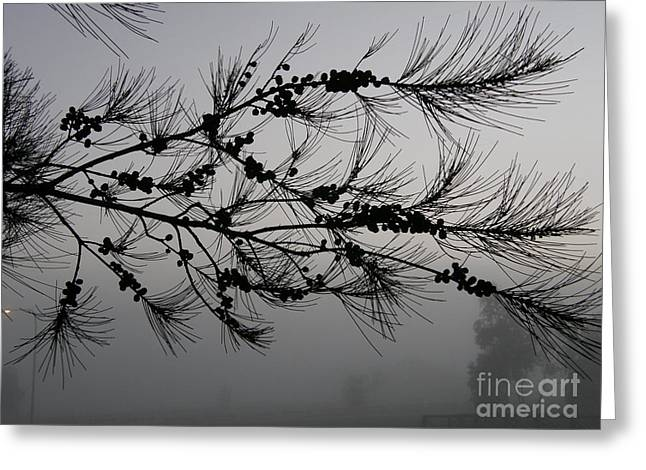Winter Pine Branch Greeting Card