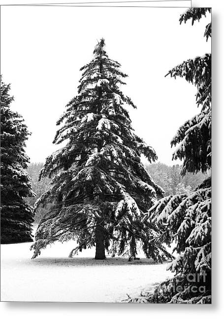 Winter Pines Greeting Card by Ann Horn