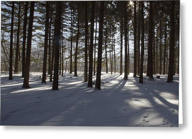 Winter Pines Greeting Card